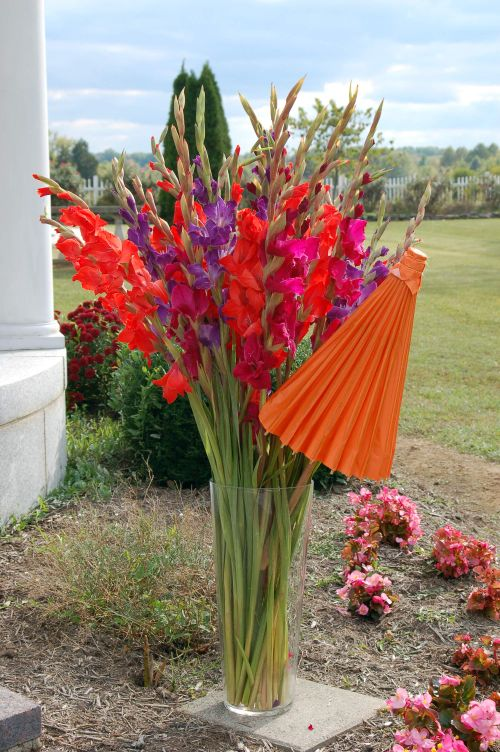 Orange parasol glad design