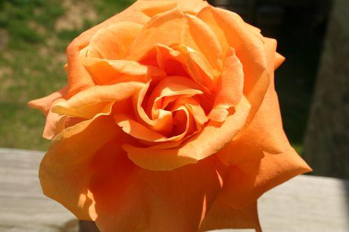 Maje Flowers My Shots 004