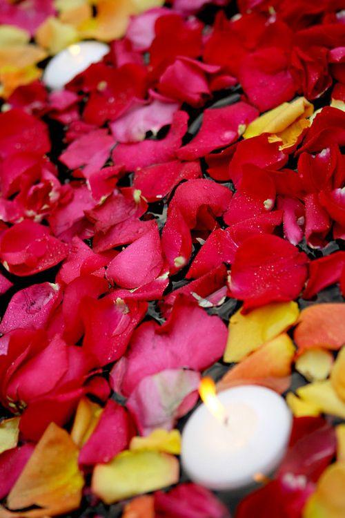 Petals_roses
